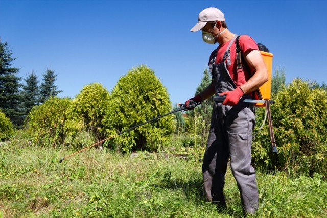 Lismore's Biodiversity Management Strategy would help fund things such as weed control to improve the local environment. But a group of councillors are trying to overturn its approval. Photo: Shutterstock