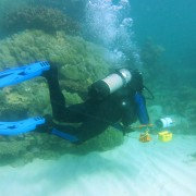 Bleached coral is one of the sobering discoveries CSIRO researchers have found.