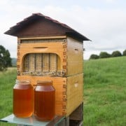Flow hive could be sweetener for bee health