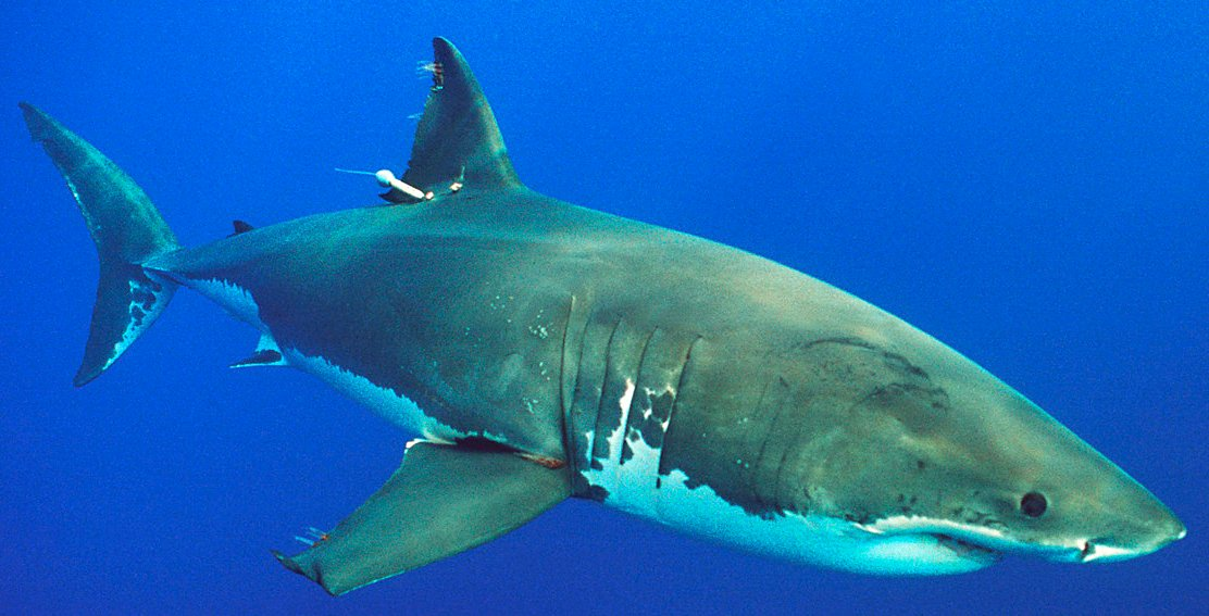 Shark kills teen girl surfing off Australia's coast