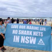 The recent 'not nets' rally at Ballina Beach. Photo Jeff Dawson