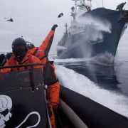 Sea Shepherd crew member Laurens De Groot hurls a bottle of butyric acid (rotten butter) at Japanese harpoon whaling ship, the Yushin Maru No. 1, as the Sea Shepherd helicopter flies overhead during an encounter in Antarctica in 2009. Photo Adam Lau/Sea Shepherd Conservation Society