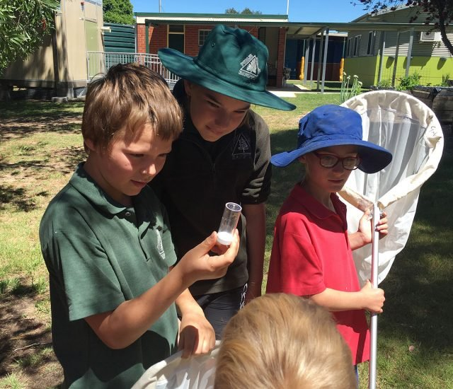 Children from rural primary schools in the Lithgow district learning about bees and pollinators during last year's Australian Pollinator Week. Photo supplied by Bees Business.