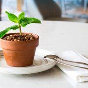 Pot Plant Tiramisu by Simon Jones of Elements of Byron