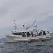 Shark nets: Sea Shepherd accuses media of 'fear mongering'