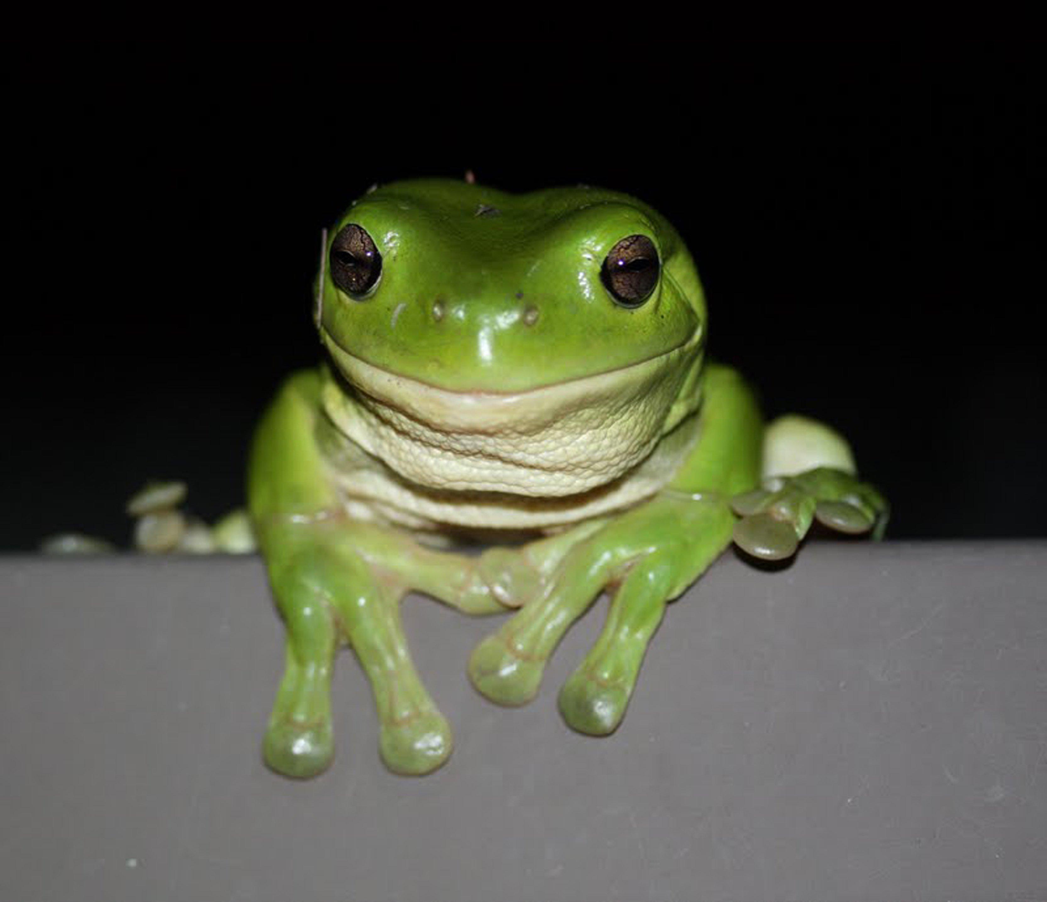 It's World Frog Day *hippity-hoppity* – Echonetdaily