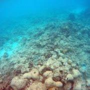 Lizard-dead-reef