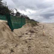 Dune fencing at New Brighton Beach. image006