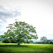 EI-tree-David-Lisle