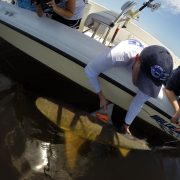 KL-and-NW-bull-shark-prior-to-release1-Nick-Whitney