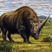 Rhino-unicorn